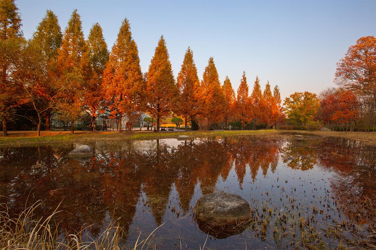 池の隣のまっすぐに伸びた道に赤く染まった木が立ち並んでいる。