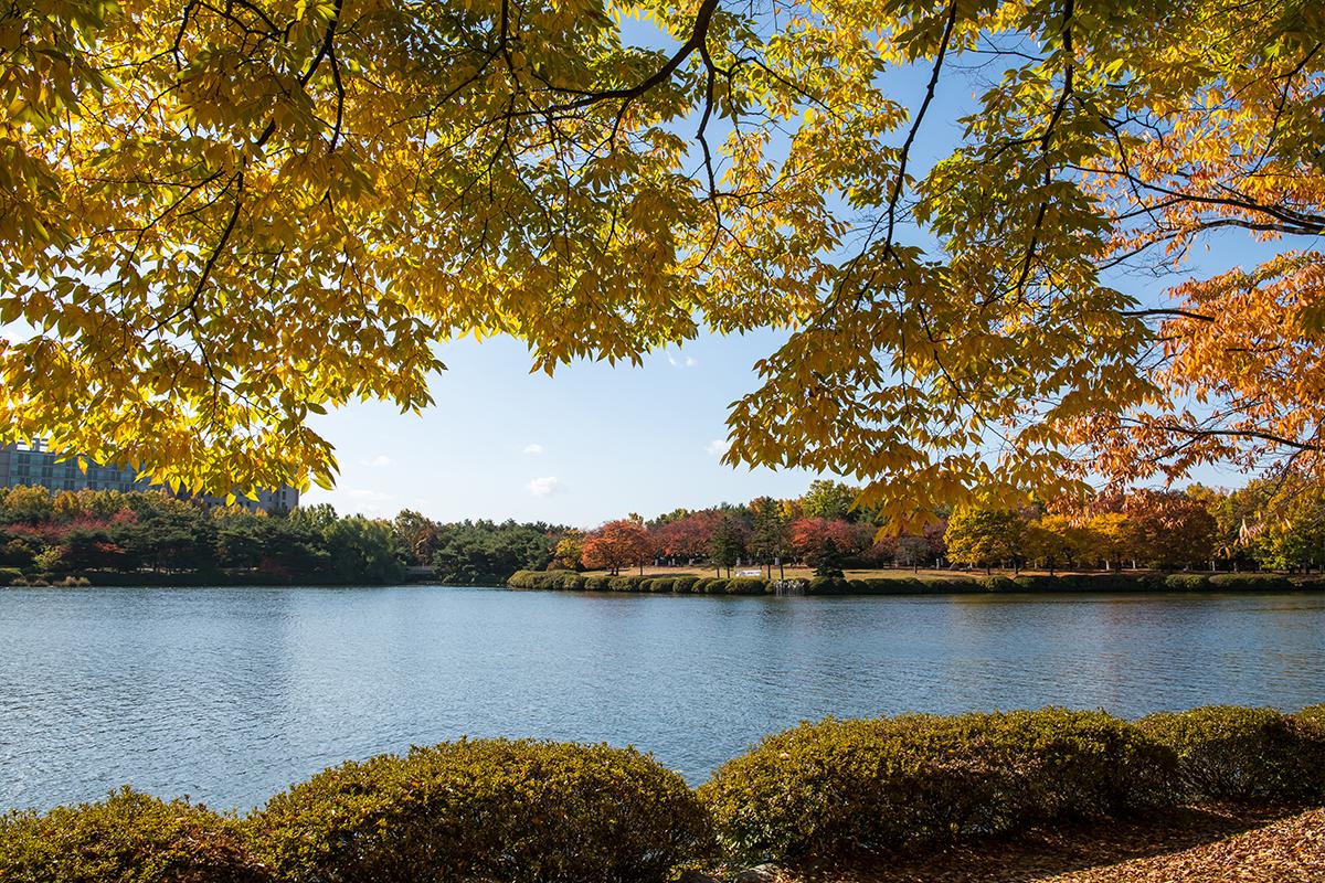 秋の一山湖公園の全景。