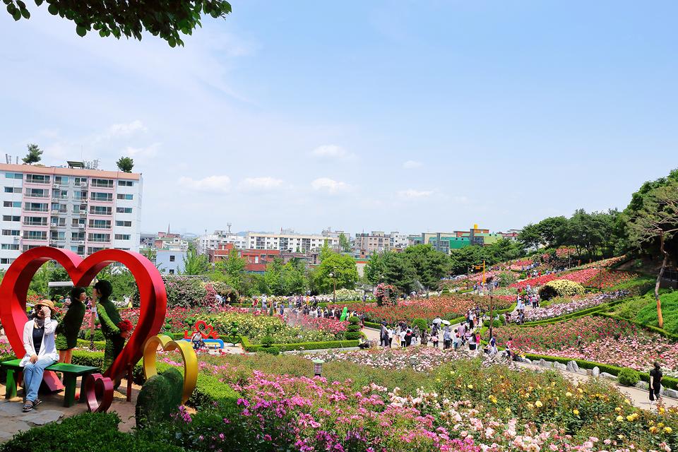 부천 장미축제 관련 사진