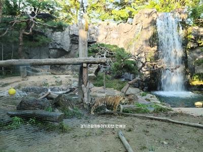 용인 가볼만한곳 에버랜드 전경 호랑이 동물원2