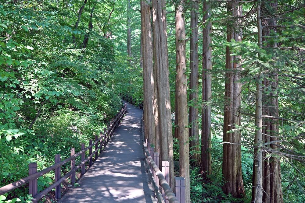 서울근교 계곡 청계산맑은숲공원 힐링숲길