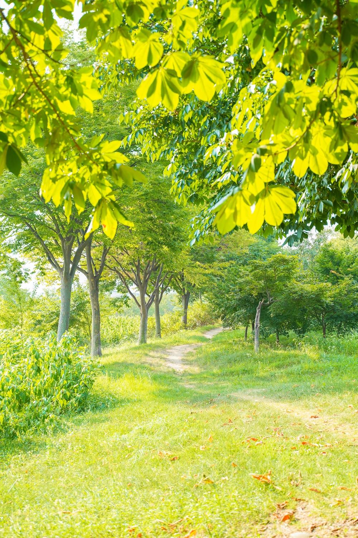 하남 미사경정공원 공원 산책로